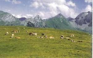 Alp Diemtigtal HinterMaenigen