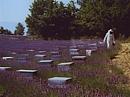 Bienenkästen Lavendelfeld