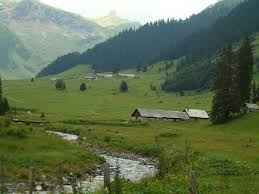Glarner Alpkäse